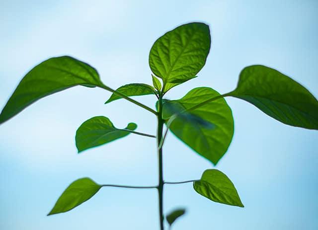 Desenvolvimento <strong>Sustentável</strong>